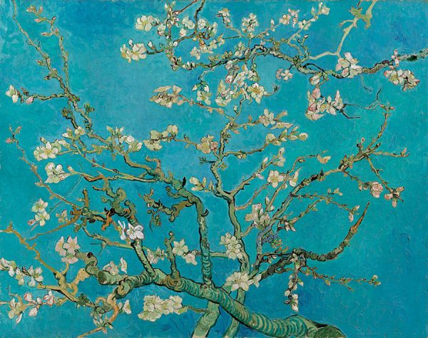 Blossoming-Almond-Tree
